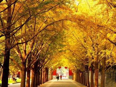 北京 qiutian